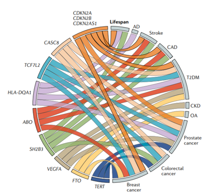 DNA variants for genes